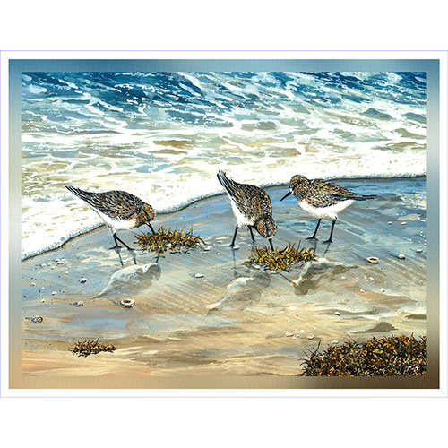 Sandpiper Trio on Shore 36 x 48 Canvas